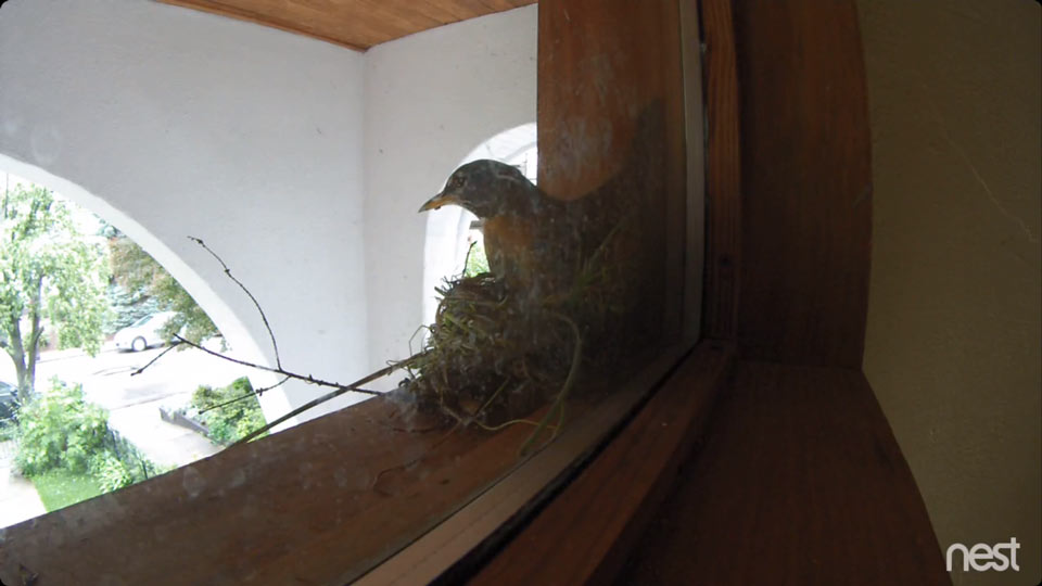 Hot nest-on-nest action