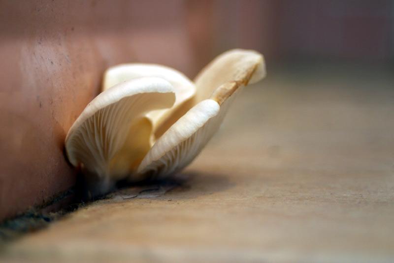 Mushroom!